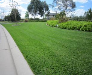 our irrigation contractors recommend the use of bluegrass